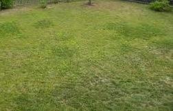 Lawn Repair Tips My Home Turf