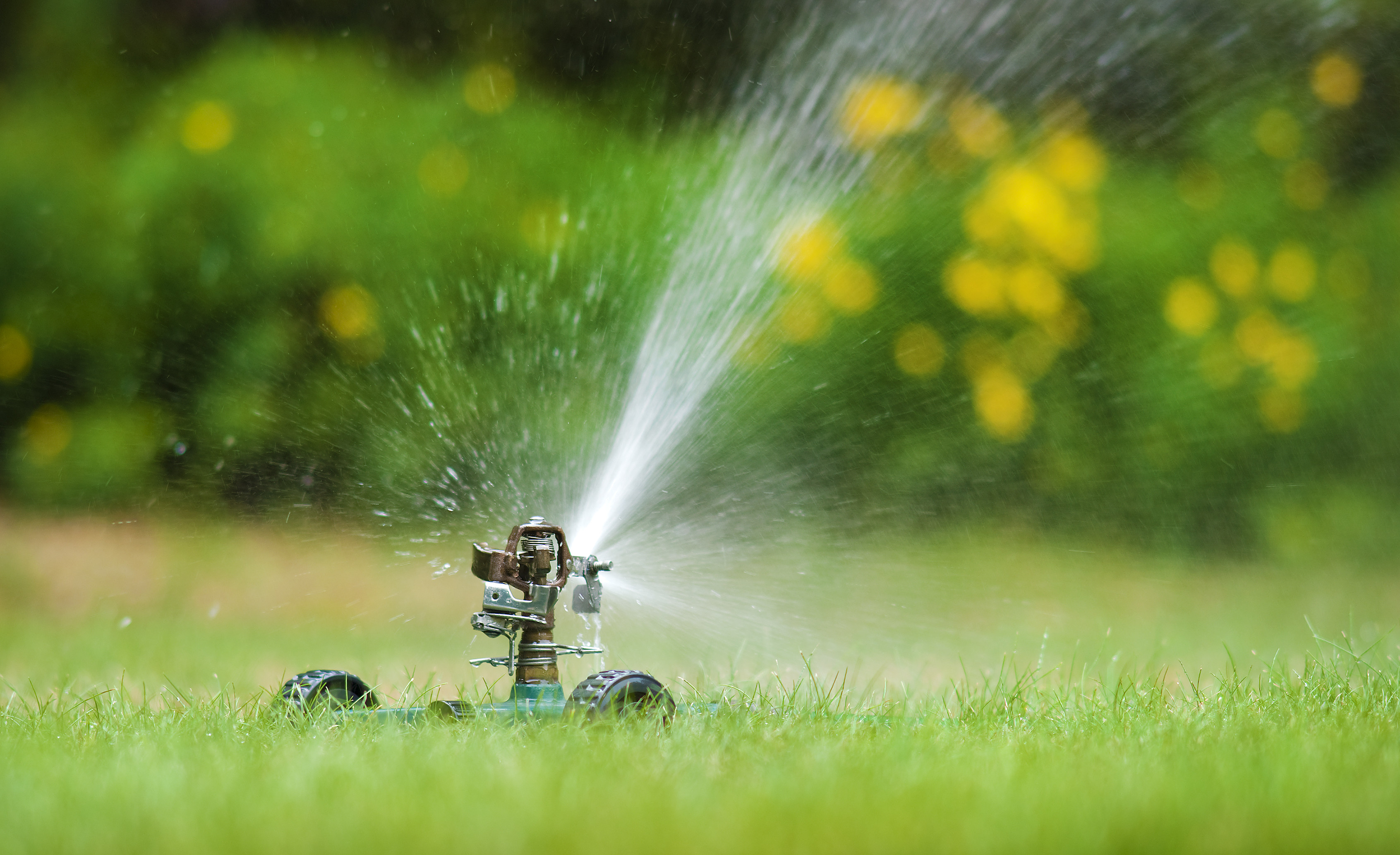 Reducing Water Usage on Home Lawns