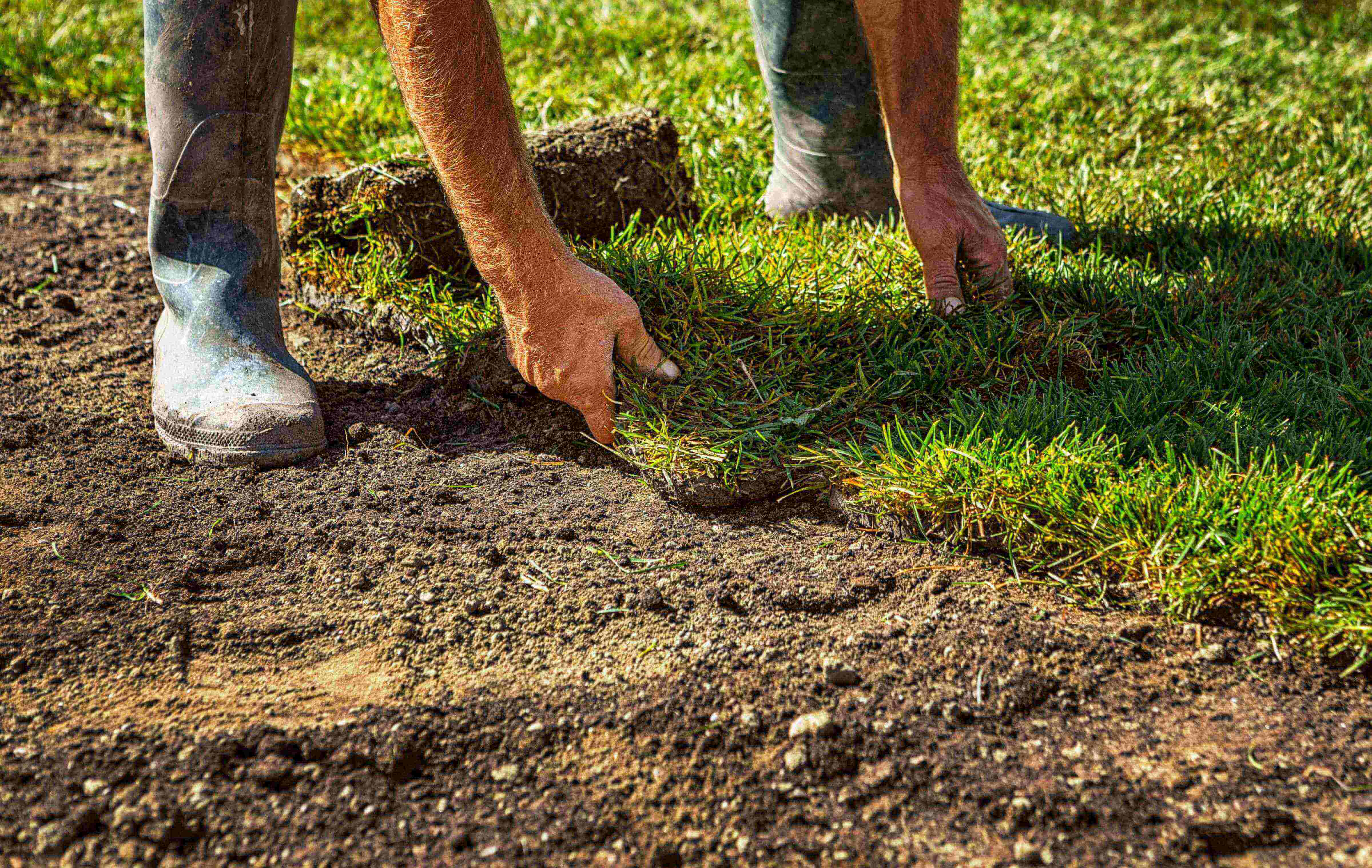 Checklist for site and soil lawn preparation