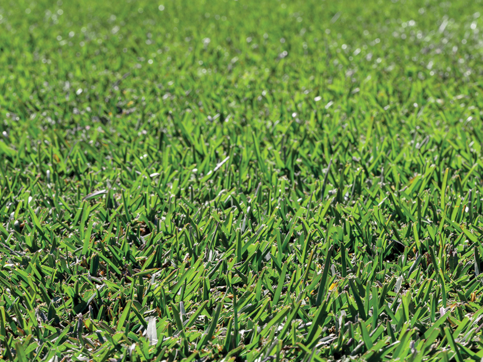 Tips for revitalising your lawn after the long hot summer